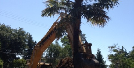 Excavator Removing a Tree